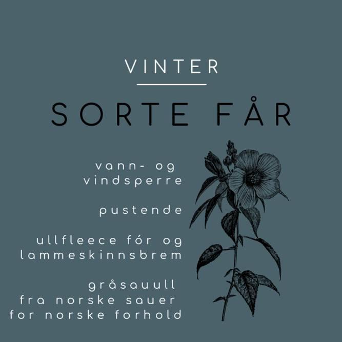 Bilde av SORTE FÅR VINTER (46/50)